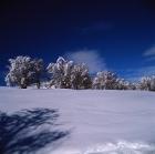 Χειμερινός37