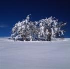 Χειμερινός38